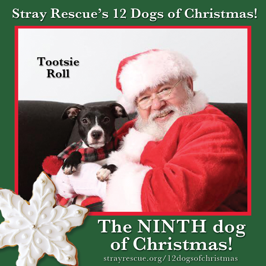 12 Dogs Of Christmas.Stray Rescue Of St Louis 12 Dogs Of Christmas