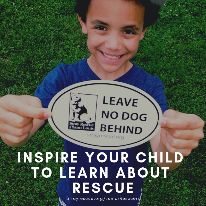 Introduce your child to the wonderful world of rescue