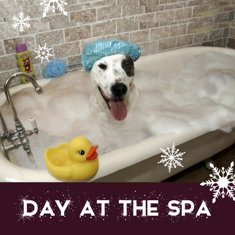 Day at the Spa WEB