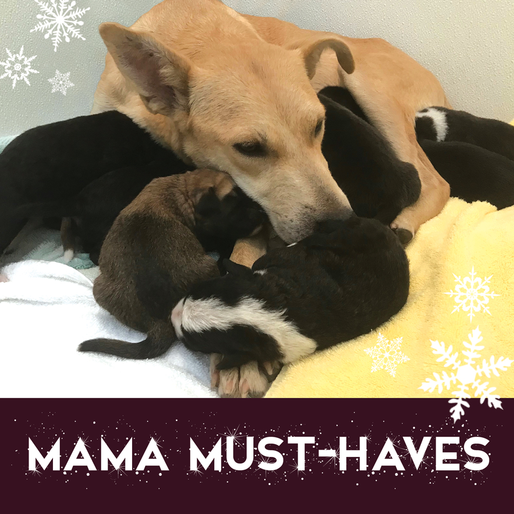 Mama Must haves Bundle 2018 WEB