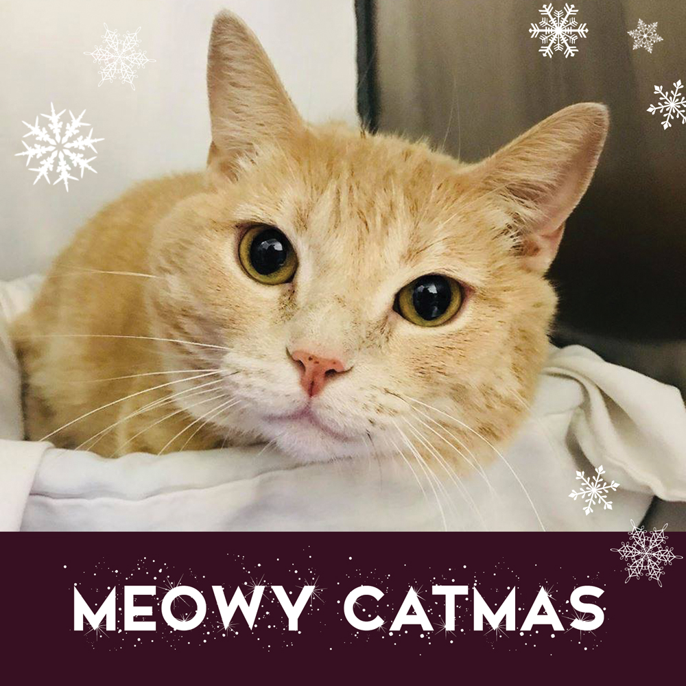 Meowy Catmas Package 2018 WEB