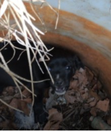 puppy in pipe