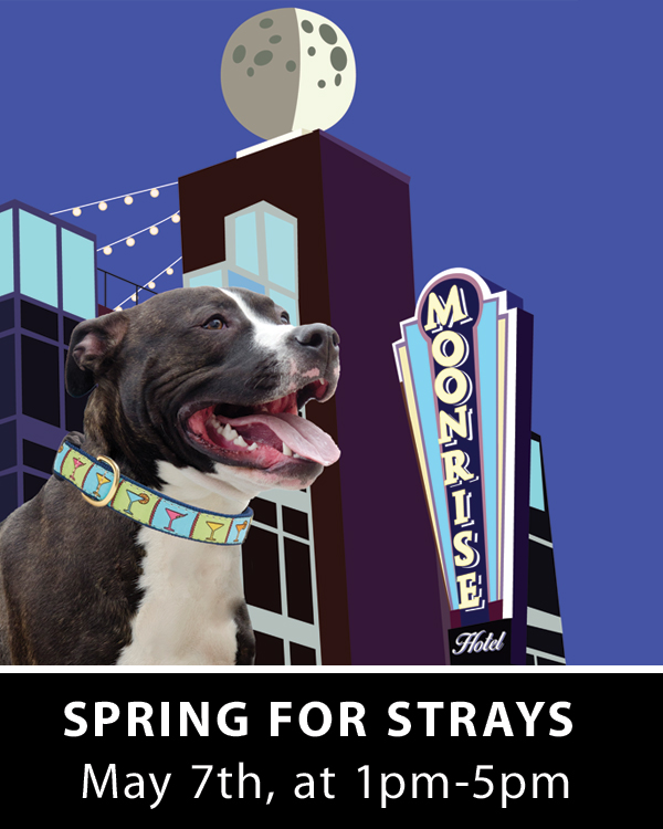 Spring For Strays Event
