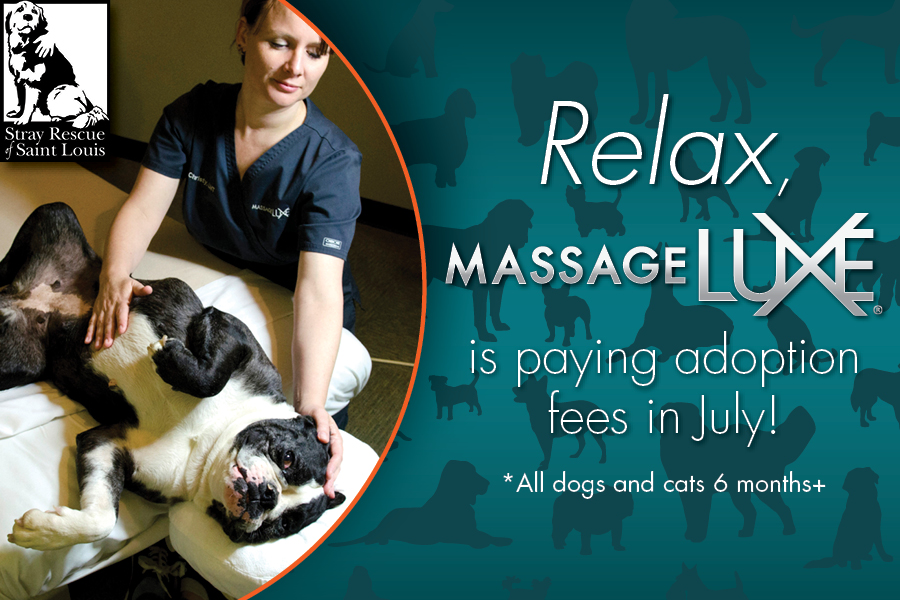 web module massage luxe