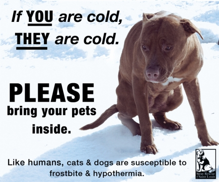 Cold Weather Tips & Animal Safety for the Dangerous Temperatures