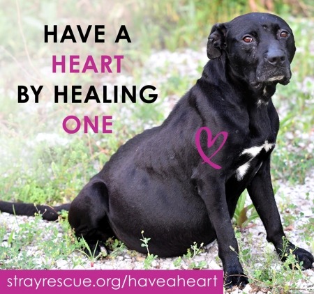 Have a Heart by Healing One