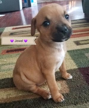 Jewel SLP - PENDING!